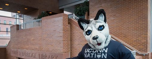 Jonathan the Husky wears a UConn Nation sweatshirt at the Homer Babbidge Library