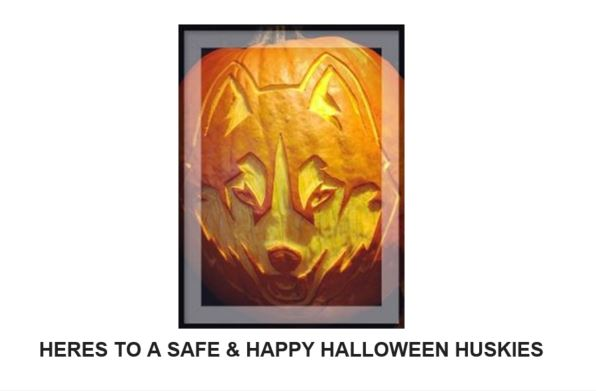 """Picture of UConn Husky Mascot carved into pumpkin with the words """" HERES TO A SAFE & HAPPY HALLOWEEN HUSKIES"""" written below it."""